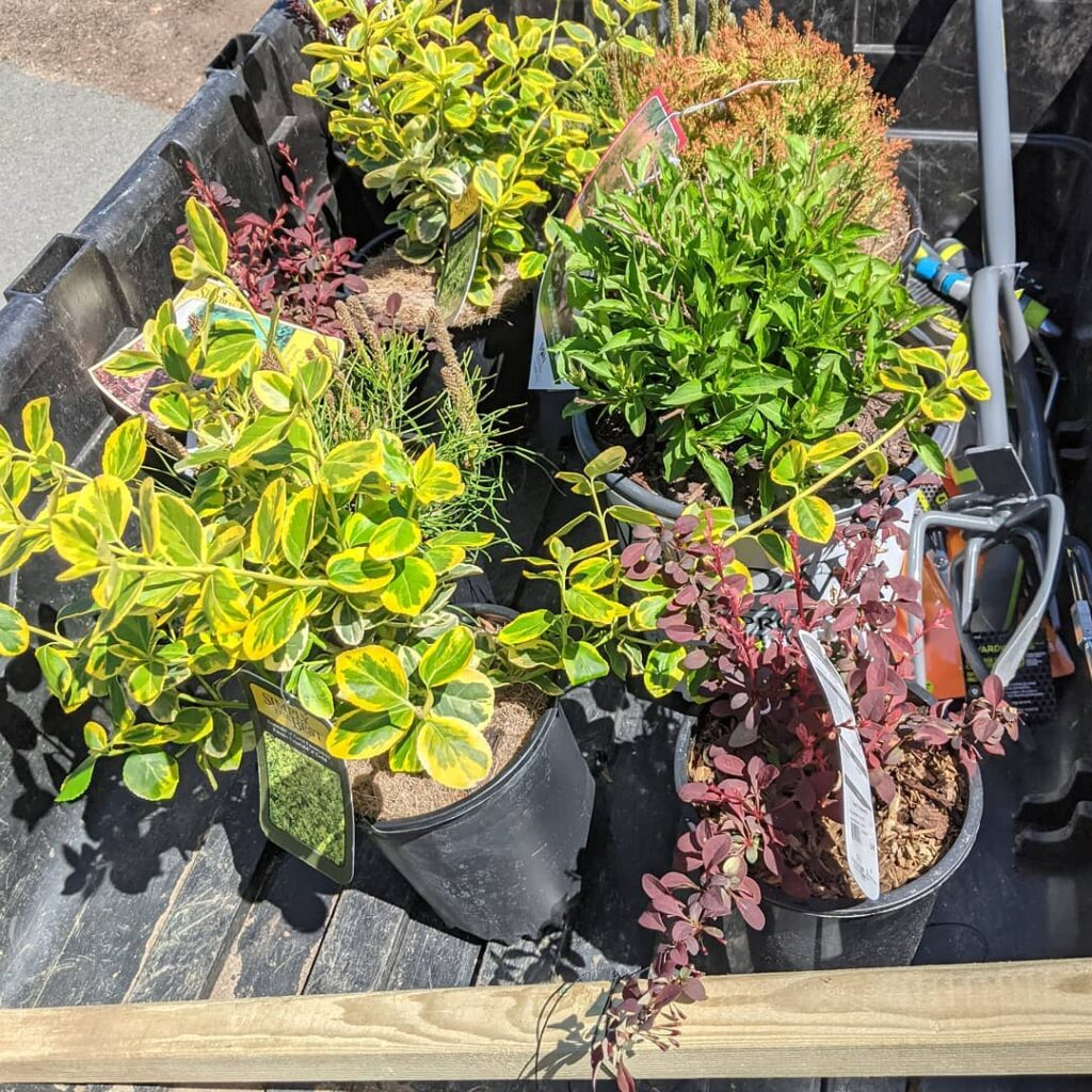 Today was a gorgeous day to visit the local nursery. Here's some of the 25 plants we got. And they are listed as deer resistant! We got most of them in the ground today. Tomorrow the rest goes in as well as ground cover and mulch. I had to leave my beautiful garden in NL when we moved to NS!  #pinegrovenovascotia #plantingagarden #deerresistantplants #localnursery #buylocal #jctextileart #plants #bushes #sunnyday #weigelia #astilbe #juniper #bayberry